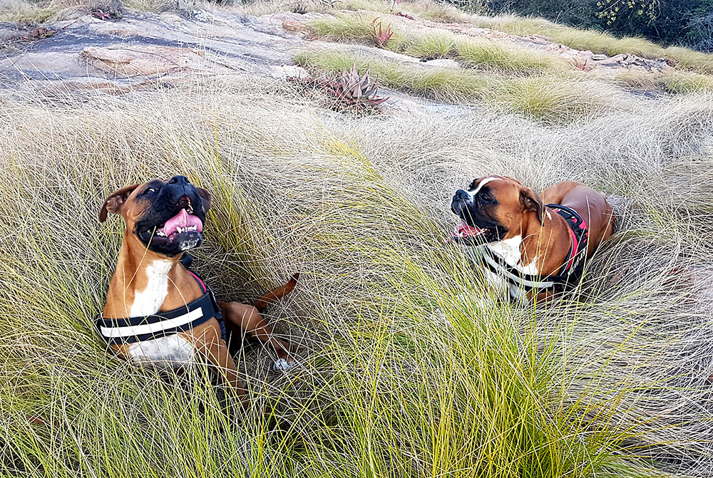 Boxer Dogs, Free-Range Eggs, umSisi House, Kruger National Park, Zero Food Waste, Gourmet Getaway, Food Management at Home